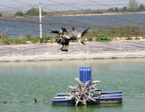 الطيور في الشبكة